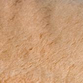 Наматрасник (лама)
