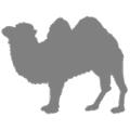 из шерсти верблюда