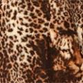 Меринос Леопард коричневый
